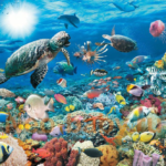 Мир морей и океанов