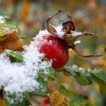 Всероссийский конкурс «Первый снег»